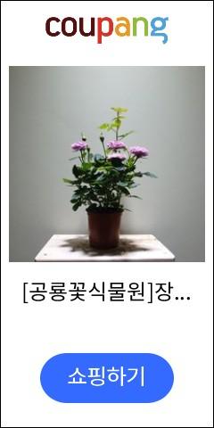 [공룡꽃식물원]장미...