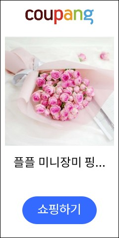 플플 미니장미 핑크...