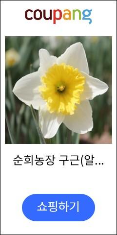 순희농장 구근(알뿌...