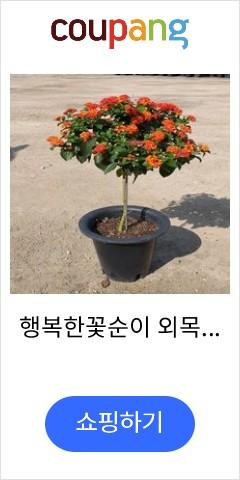 행복한꽃순이 외목대...