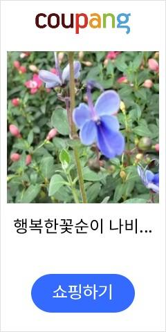행복한꽃순이 나비수...