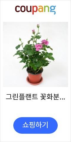 그린플랜트 꽃화분 ...