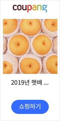 2019년 햇배 나...