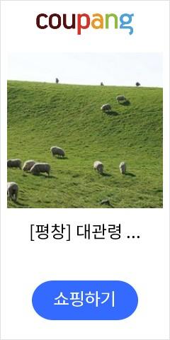 [평창] 대관령 양...
