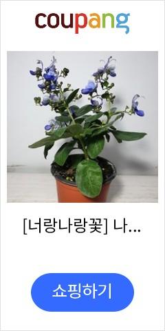 [너랑나랑꽃] 나비...