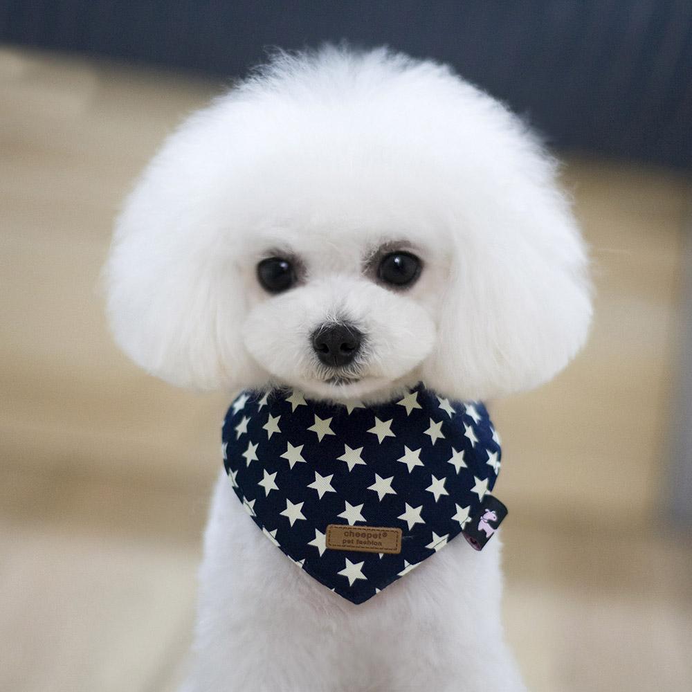 도그아이 강아지 똑딱이스카프 M, 네이비별, 1개
