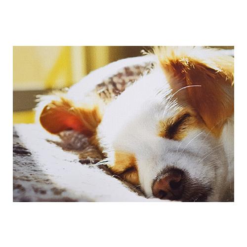 앤비커머스 캔버스 프린팅 액자 잠자는강아지, 단일 색상