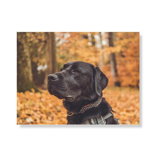 리틀하이커 Dog 캔버스액자A3W36 70