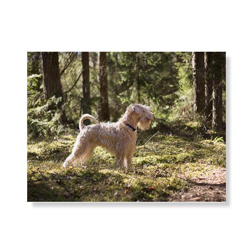 리틀하이커 Dog 캔버스액자A3W36 29