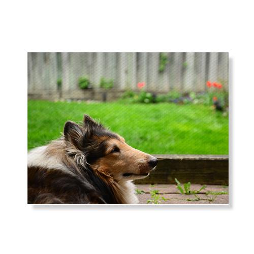 리틀하이커 Dog 캔버스액자A3W36 26