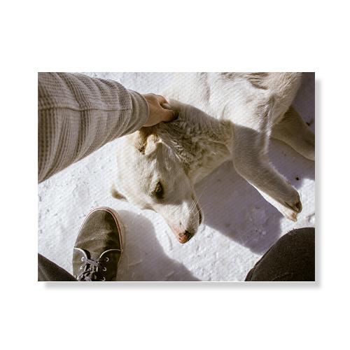 리틀하이커 Dog 캔버스액자A3W36 19