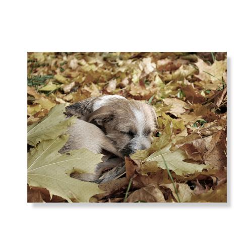 리틀하이커 Dog 캔버스액자A3W36 48