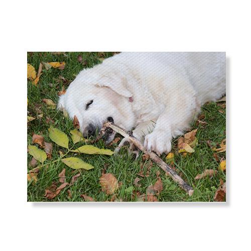 리틀하이커 Dog 캔버스액자 A3W36 102, 우드