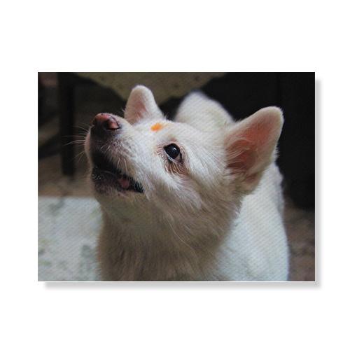 리틀하이커 Dog 캔버스액자 A3W36 96, 우드