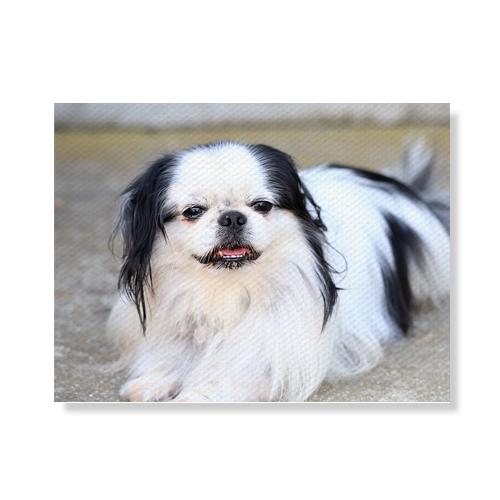 리틀하이커 Dog 캔버스액자 A3W36 134, 우드