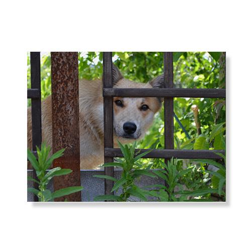리틀하이커 Dog 캔버스액자 A3W36 90, 우드