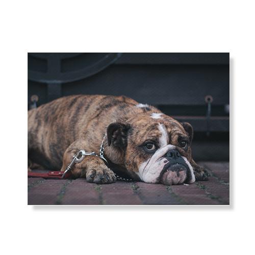 리틀하이커 Dog 캔버스액자 A3W36 103, 우드