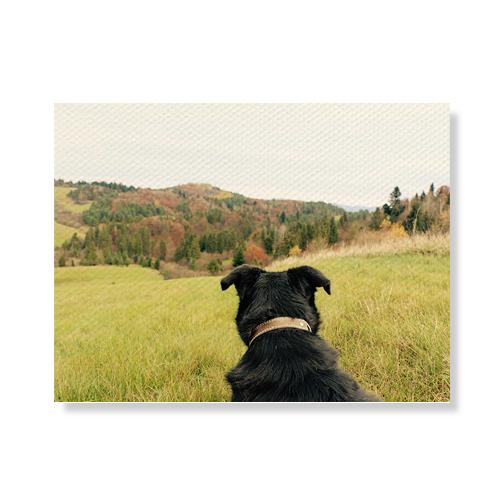 리틀하이커 Dog 캔버스액자 A3W36 87, 우드