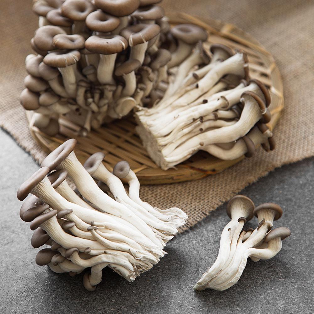 친환경 인증 국내산 느타리버섯, 500g, 1팩