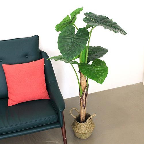 조아트 클래식 알로카시아 120cm, 혼합 색상, 1개