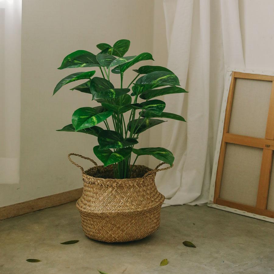 아스파시아 아우레움 스킨답서스 조화나무 + 해초바구니, 혼합 색상, 1세트