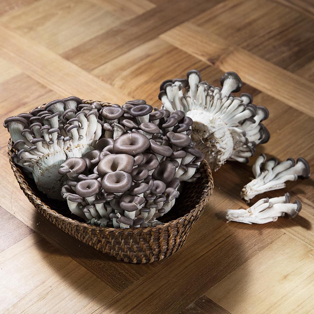 국내산 참맛 느타리버섯, 800g, 1팩
