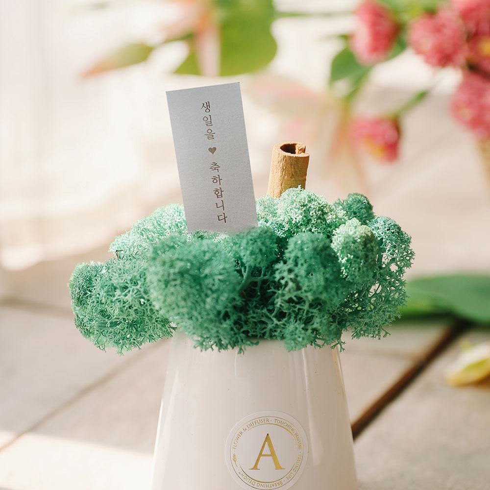 아스파시아 무지개 굴뚝 스칸디아모스 화분 + 메세지카드 퍼시픽그린 생일축하, 1세트