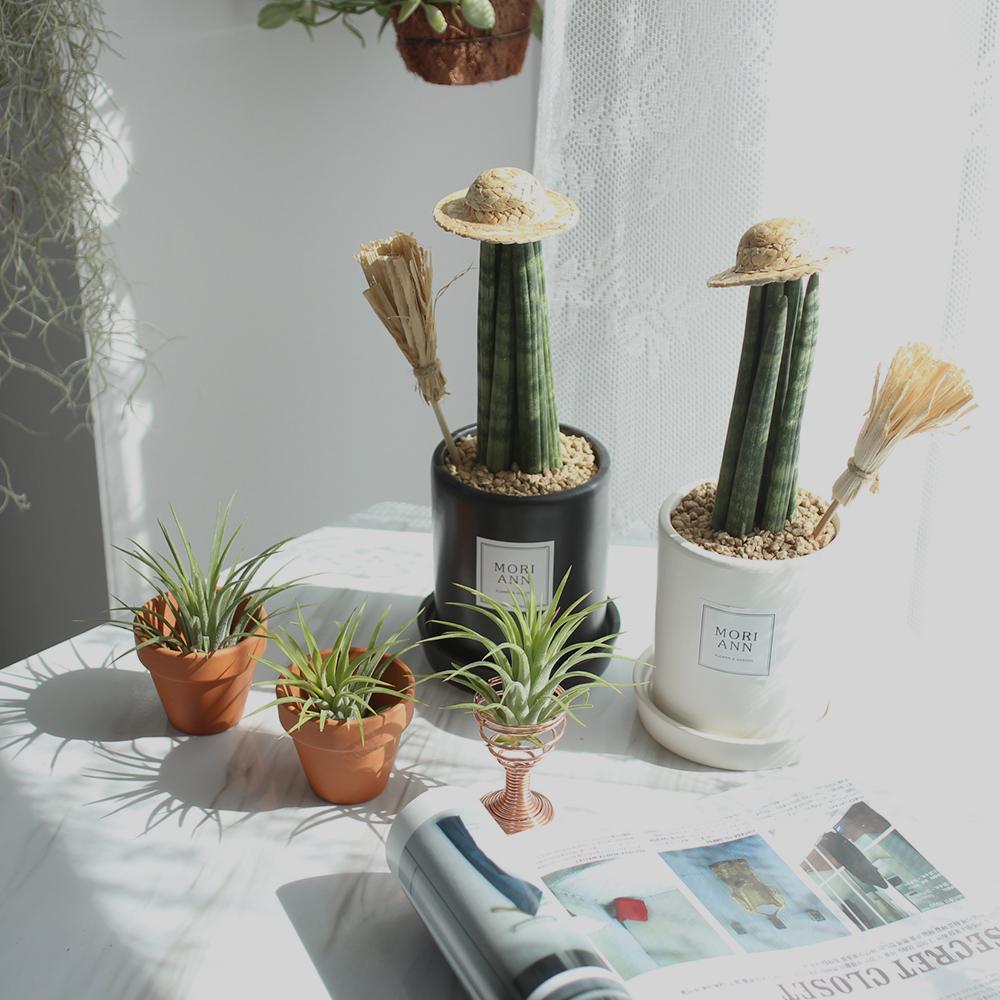 모리엔 생화 공기정화 식물 스투키 2종 세트, 혼합색상