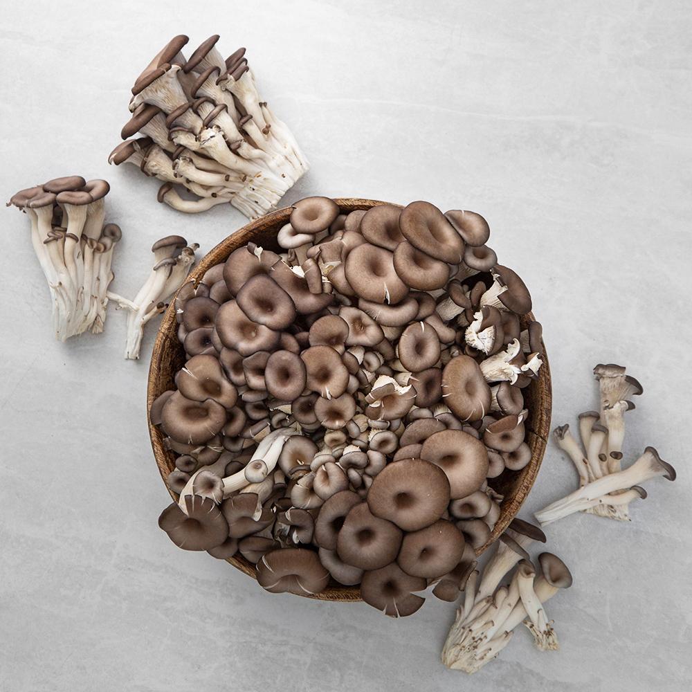 무농약 인증 국내산 느타리버섯, 2kg, 1팩