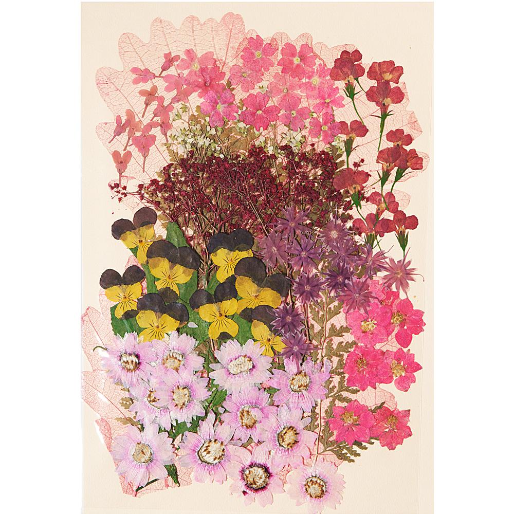 편지쓰는날 압화꽃모음 1326, 핑크