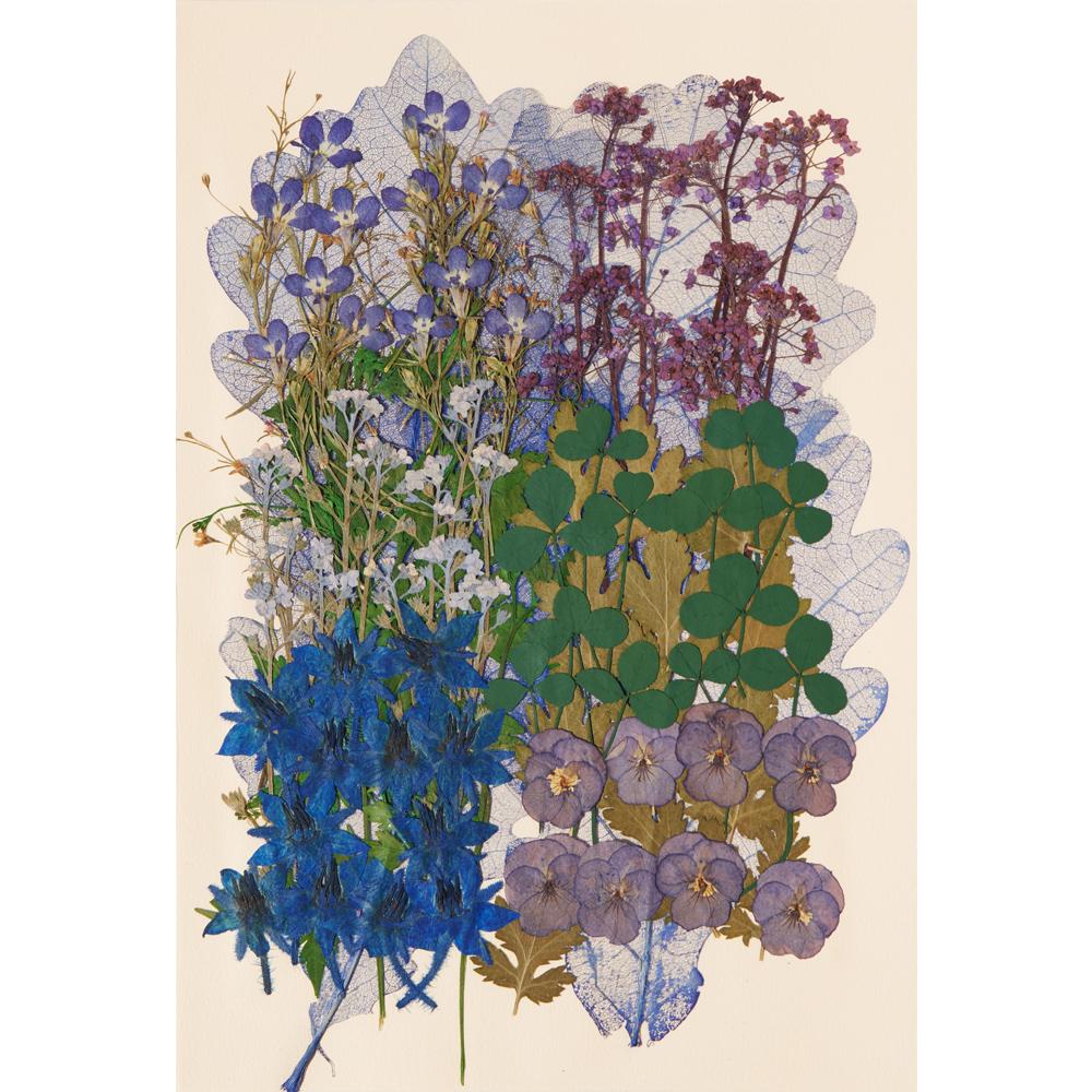 편지쓰는날 압화꽃모음 1324, 블루