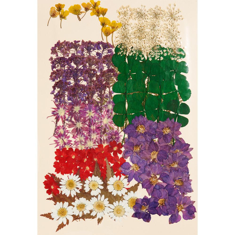 편지쓰는날 압화꽃모음 1334, 락스퍼블루