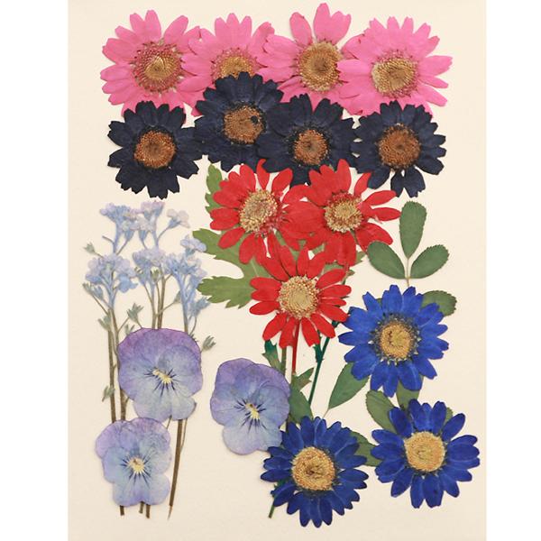 편지쓰는날 압화꽃모음 1425, 가든디자인
