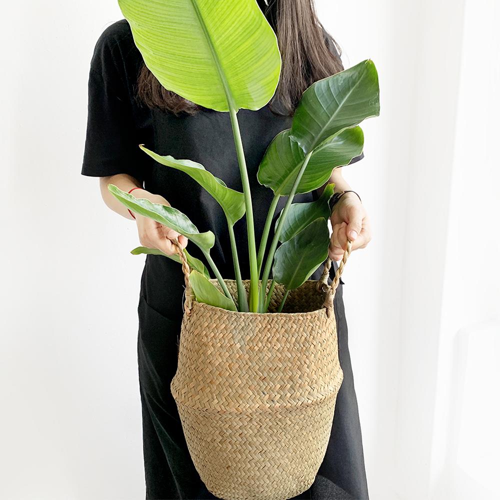 프레시가든 공기정화 식물 극락조화 + 해초 바구니 세트, 혼합색상, 1세트