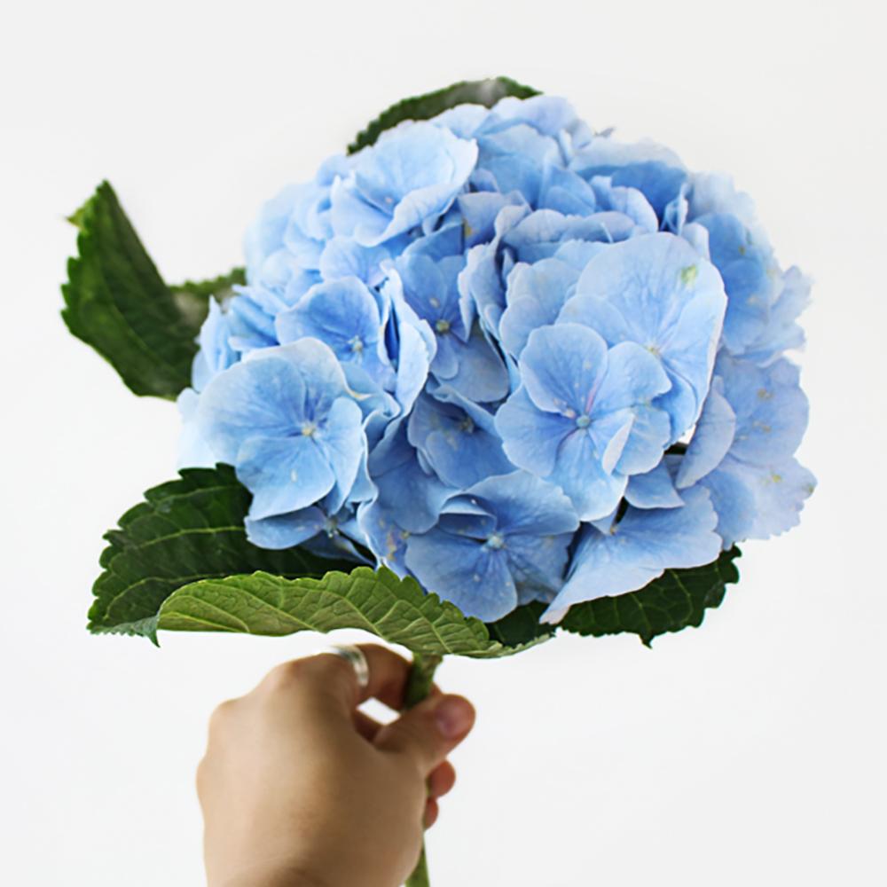아임플라워 생화 센터피스 수국, 블루