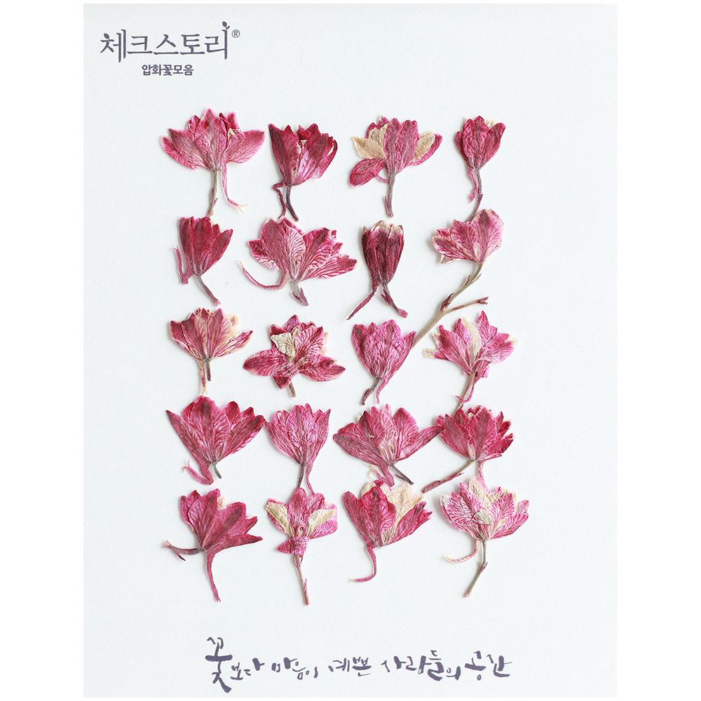 체크스토리 압화꽃송이 락스퍼봉우리, 핑크