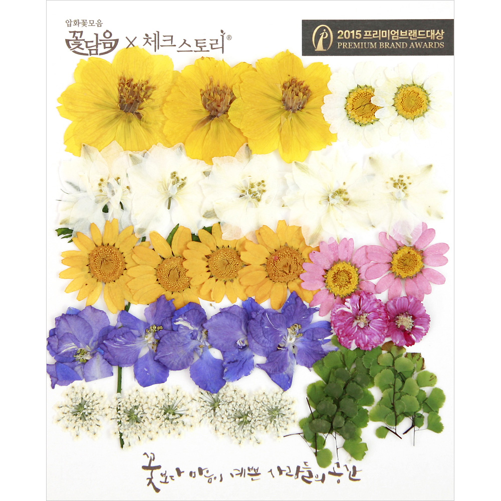 체크스토리 압화꽃 공예 B타입, 03 봄의정원