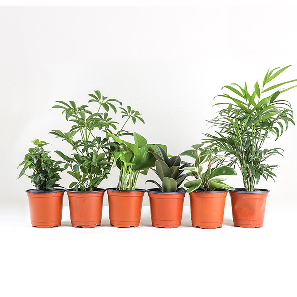 식물 추천 최저가 실시간 BEST