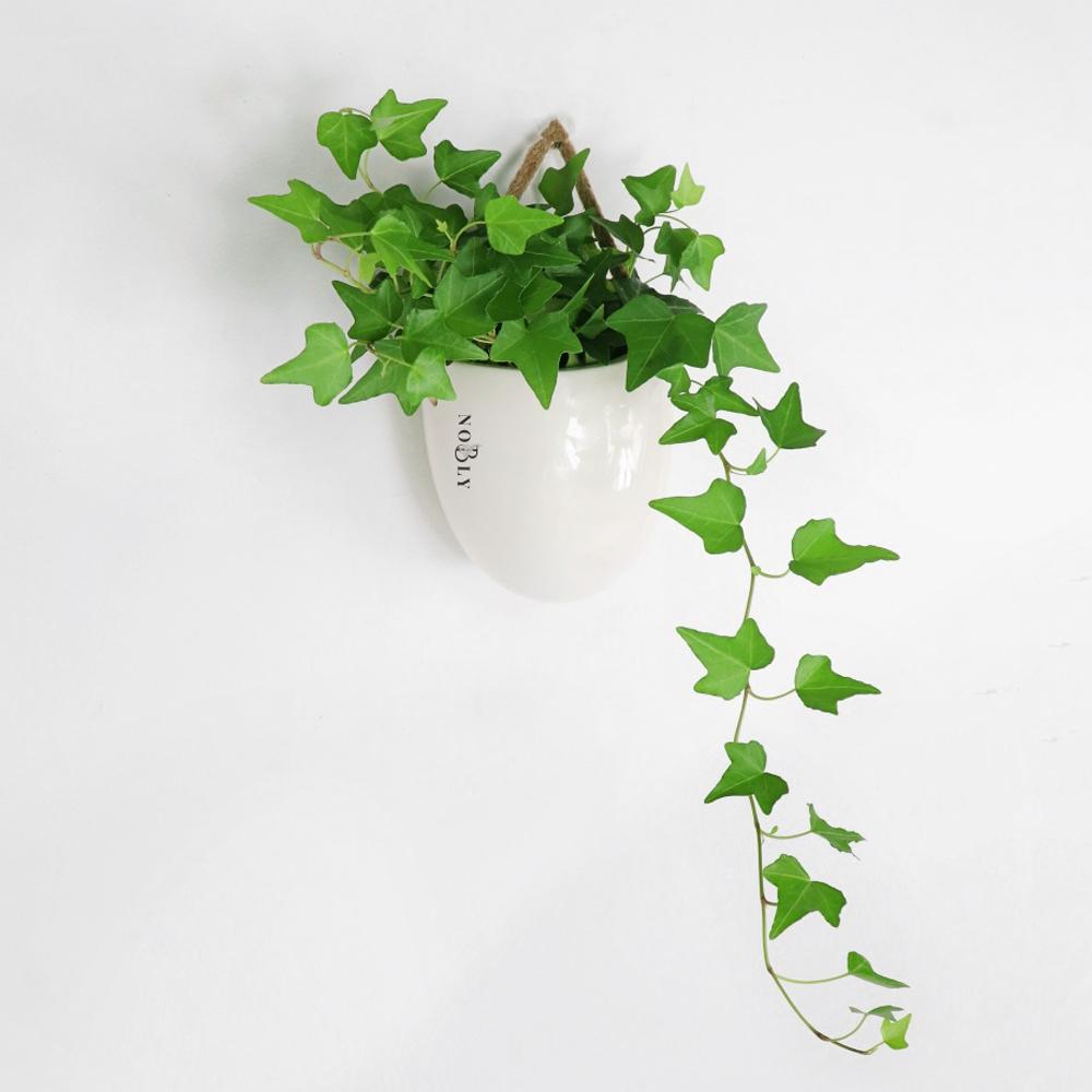 노블리 행잉 공기 정화 식물 아이비, 1개