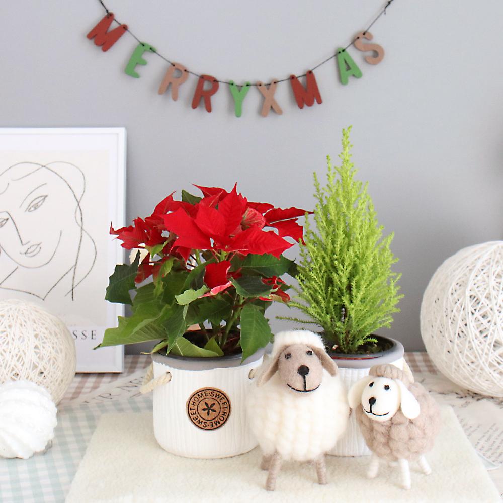 크리스마스 DIY 기프트 세트, 혼합색상, 1세트
