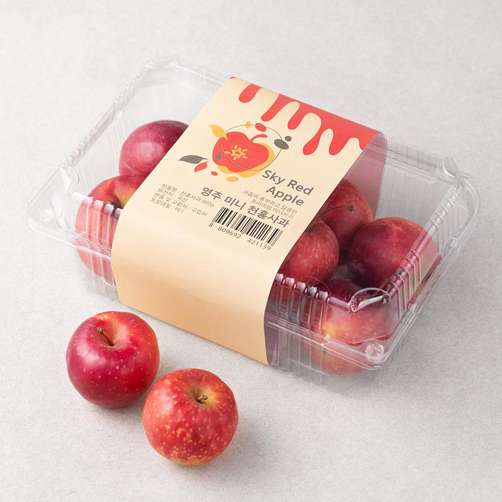 영주 미니 천홍사과, 800g, 1개