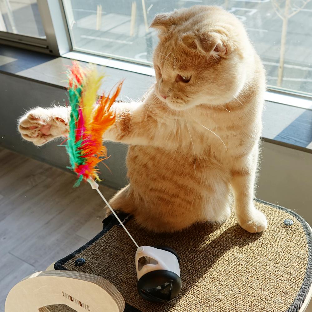 펫뿌리 메가트윙볼 고양이 장난감, 스페이스화이트, 1개