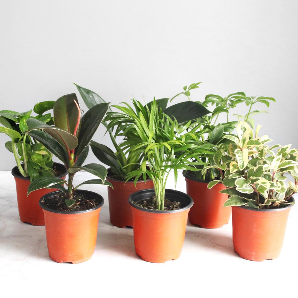 생화 공기정화 식물 소형 6종 세트, 혼합색상