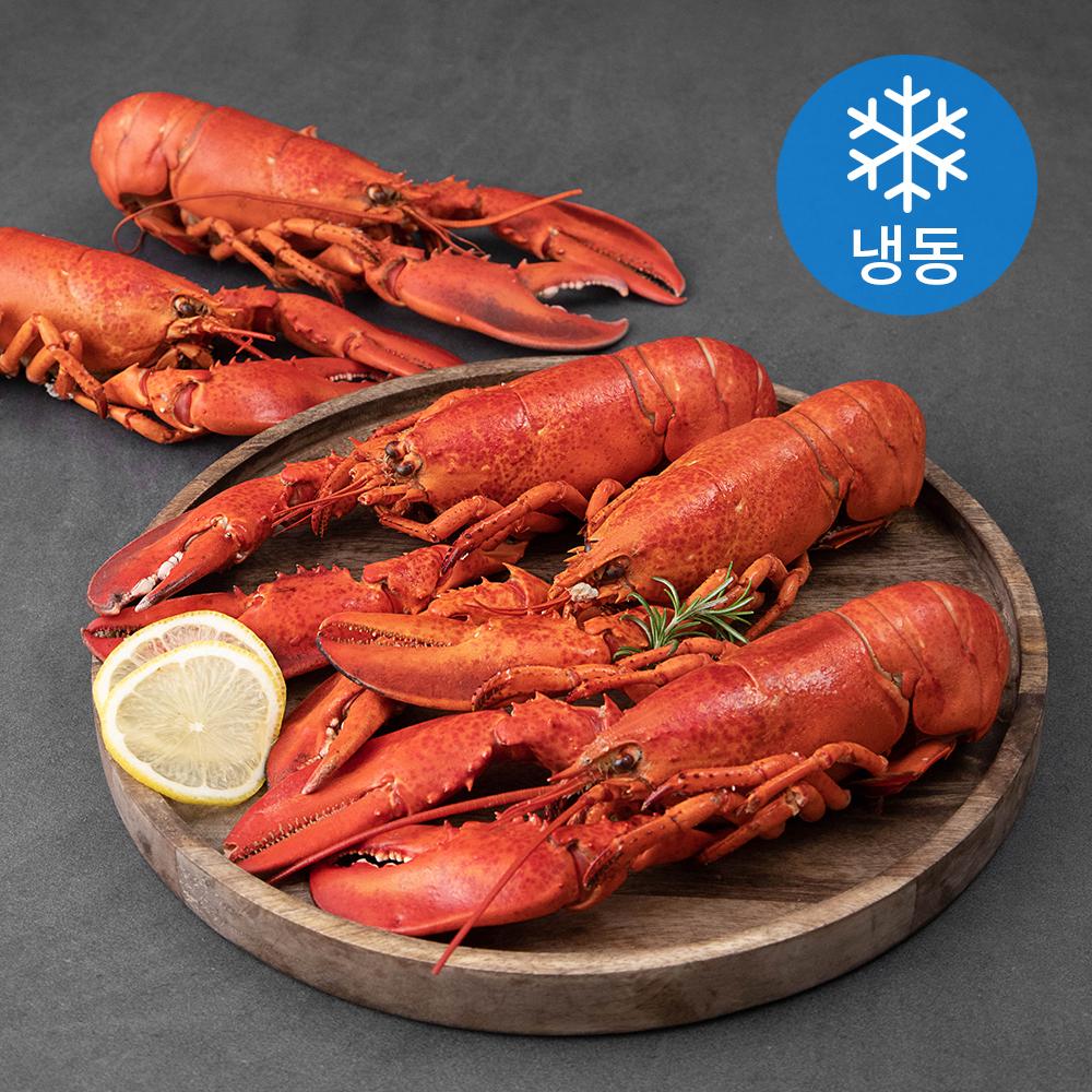 캐나다산 바닷가재 자숙 중 5입 (냉동), 1.75kg, 1박스