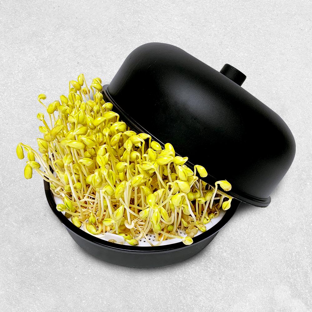코멧 홈 콩나물 재배기, 1개