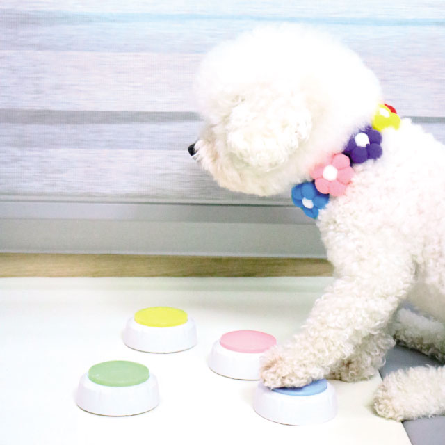 리스펫 말하는 강아지 녹음벨 훈련용품 4종 세트, 핑크, 그린, 옐로우, 블루, 1세트