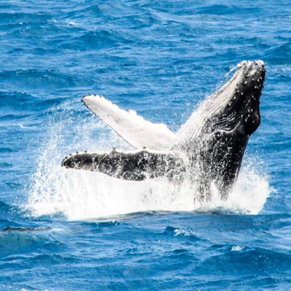 [호주] |프래이저섬| 프레이저섬 3박 4일 고래 와칭 투어 시즌