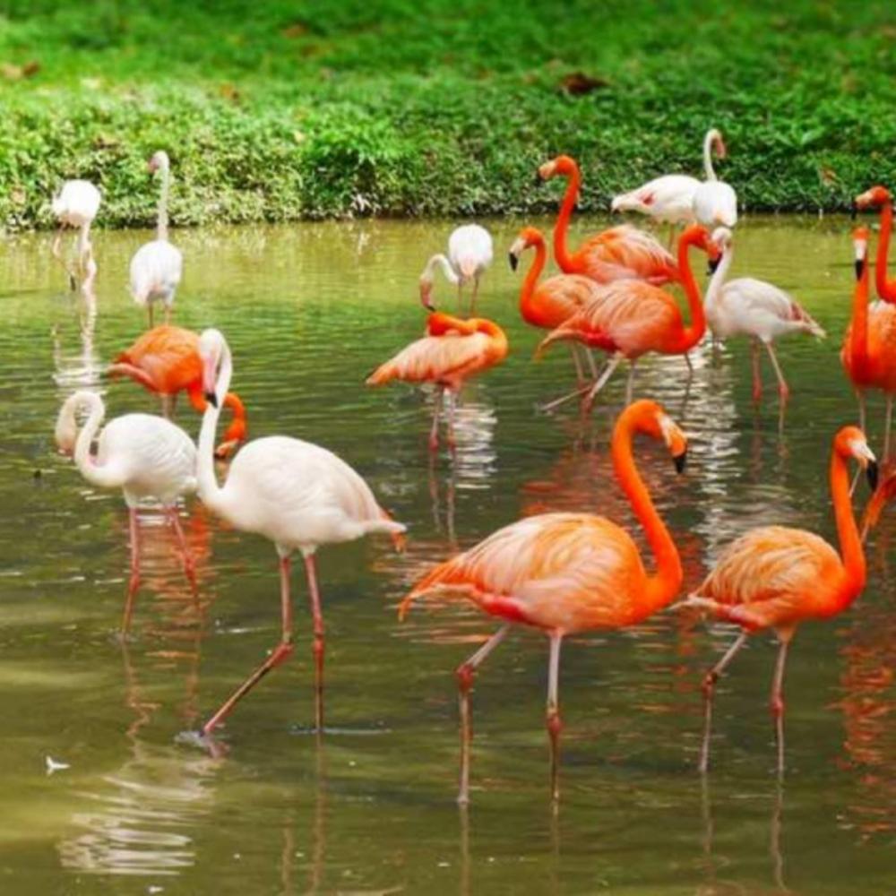 [말레이시아]  쿠알라룸푸르  국립 동물원 입장권 타 국적 방문객 + 판다 센터
