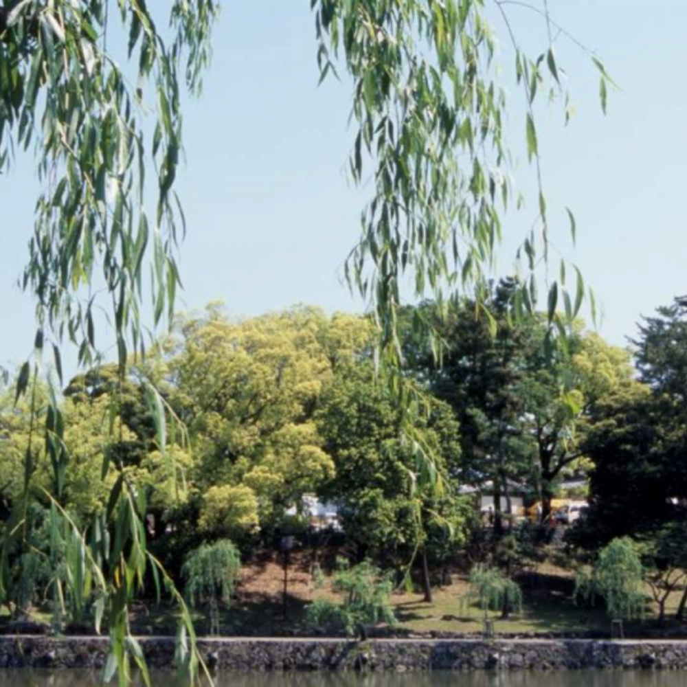 [일본]  교토  교토 토다이지 & 나라 공원 & 고후쿠지 반나절 투어 오후  (NA)
