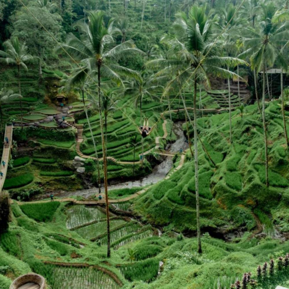 [인도네시아] |발리| 우붓 뜨갈랄랑 알라스 하룸 스윙 커플